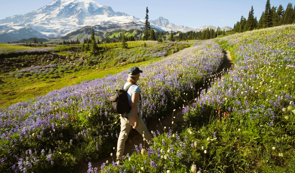 Flowers are arctic lupine