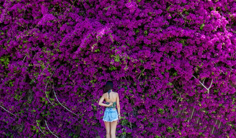 Woman standing in front of bougainvillea