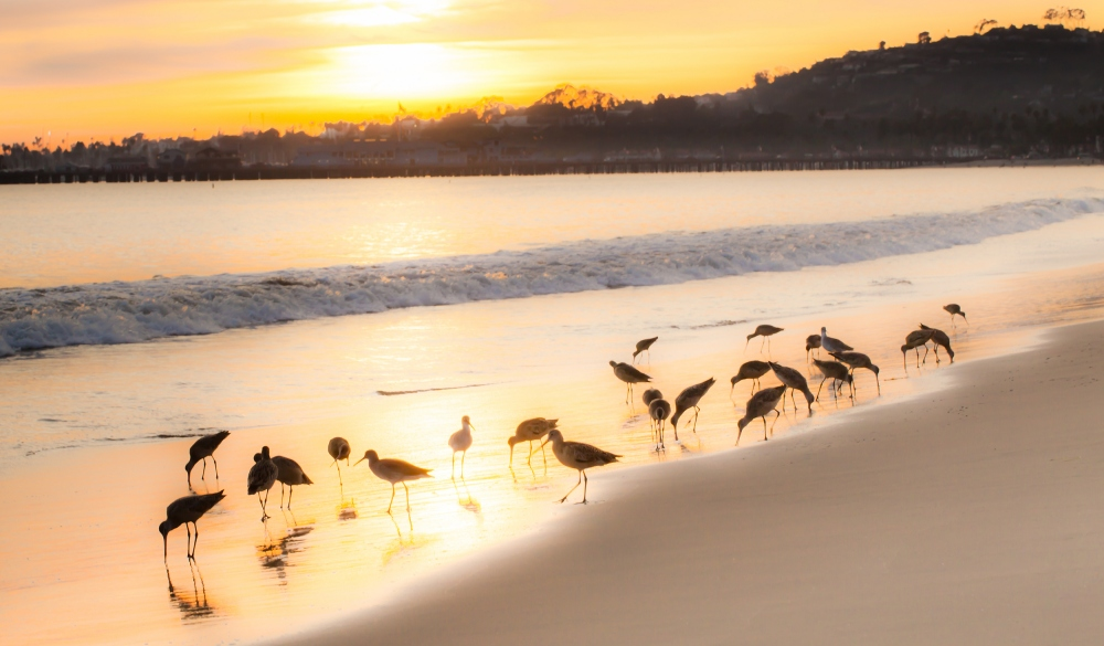 Seabirds on East Beach in Santa Barbara,