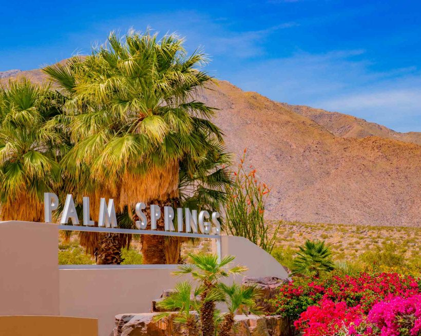 Bougainvilleas and palm trees at entrance sign in Palm Springs, California (P)