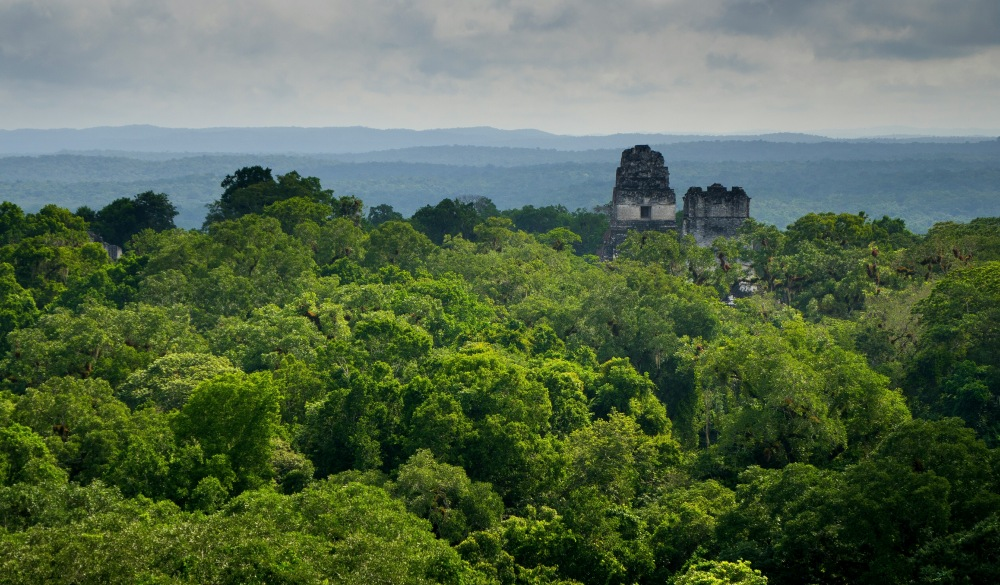 Tikal Amidst Trees At Forest Against Sky