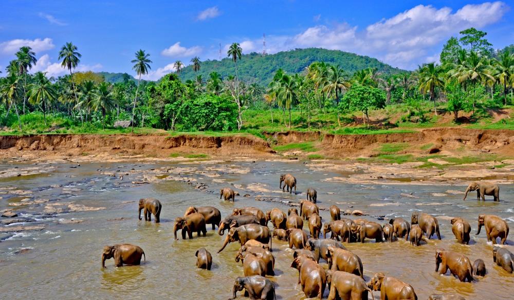 Bathing baby elephants in Pinnawala