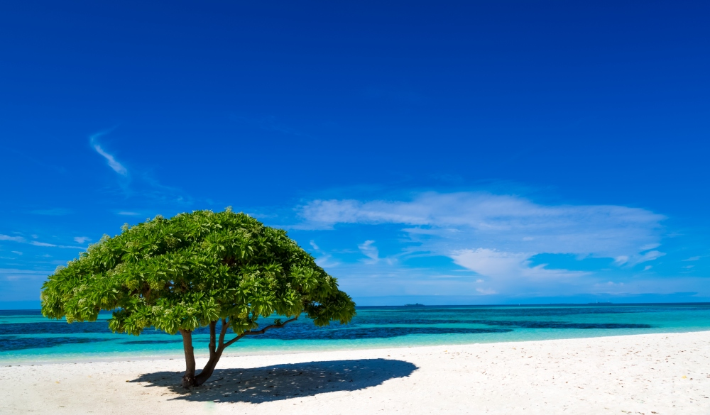 White sandy beach with a green tree Maldives