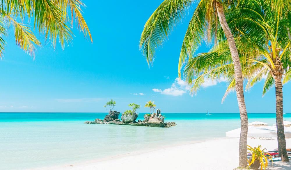 Willys rock Tropical Paradise VS Winter Wonderland