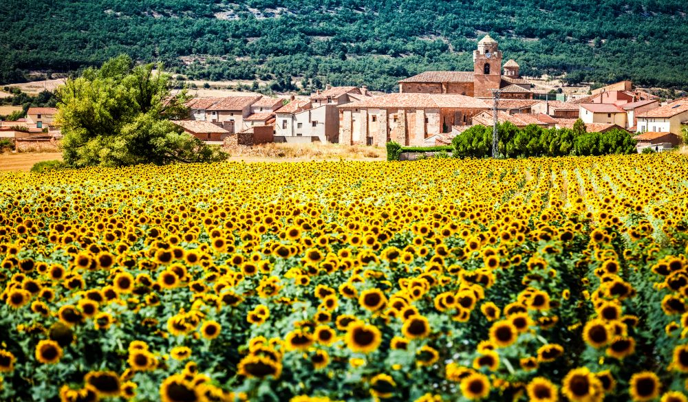 Sunflower field with ancient village at background