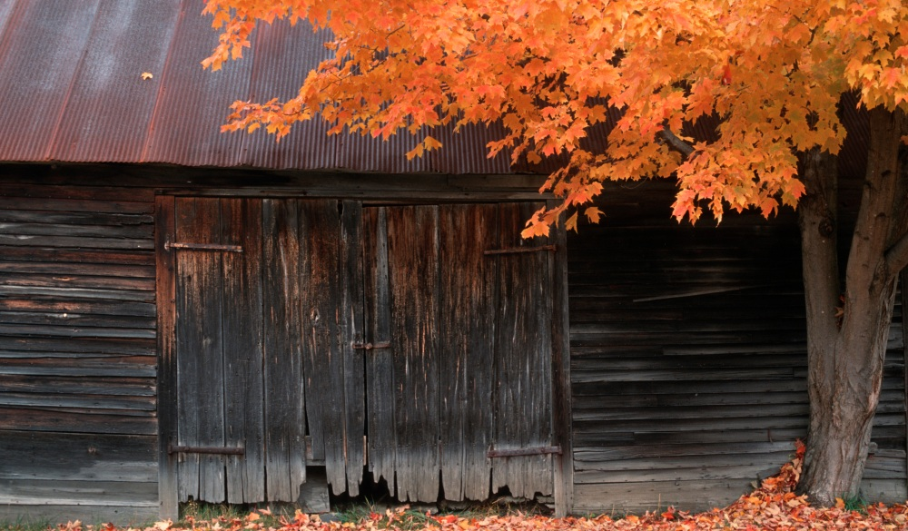Barn door, autumn tree, Vermont, USA
